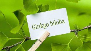 Ginkgo Biloba (Bạch Quả), Công dụng, Tác dụng, Cách sử dụng tốt nhất!