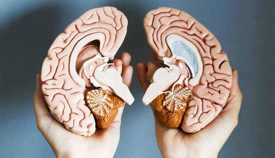Não trái não Phải, nơi có một con người khác bị cầm tù trong chính bạn!