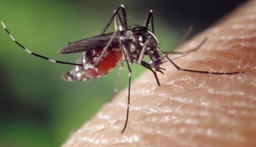 Sốt rét do muỗi