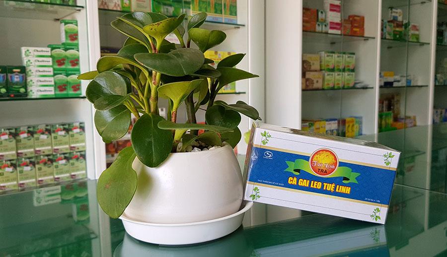 Hình chụp gói Trà Cà Gai Leo Tuệ Linh tại Nhà Thuốc Thân Thiện!