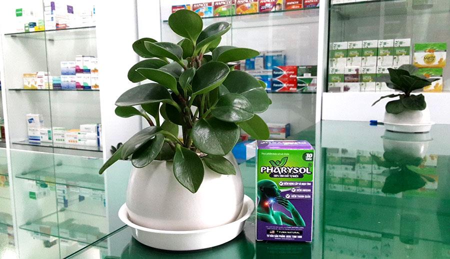 Hình chụp Pharysol tại nhà thuốc Thân Thiện!