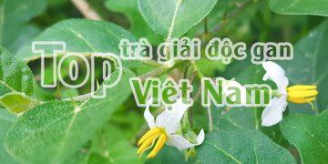 Top trà giải độc mát gan tốt nhất hiện nay đang bán ở Việt Nam!