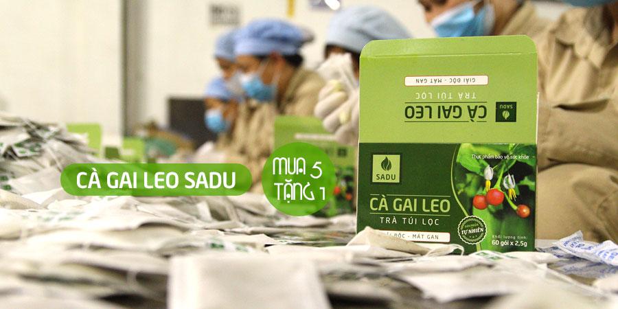Cà gai leo Sadu chính hãng 100% từ Công ty Công nghệ cao Thăng Long