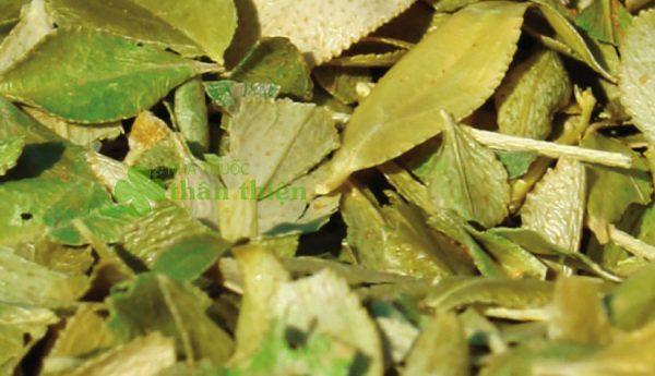 Cây buchu, hỗ trợ diệt khuẩn đường tiểu, lợi tiểu, trị bệnh khớp