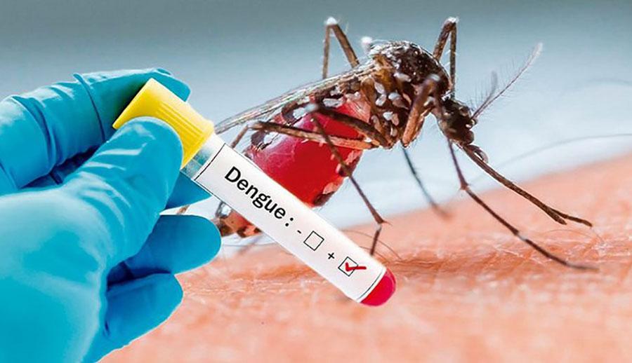 Dengue xuất huyết, Nguyên nhân, Triệu chứng, Phương pháp điều trị!