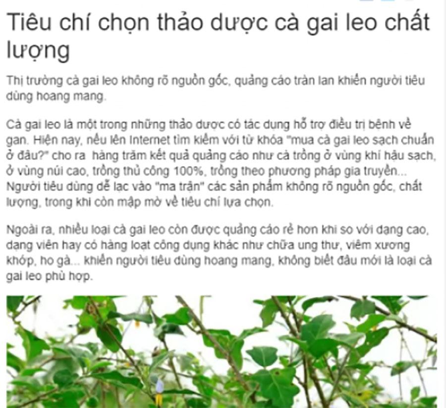 Báo chí nói về cà gai leo Tuệ Linh!