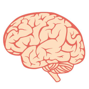 Bệnh trí não