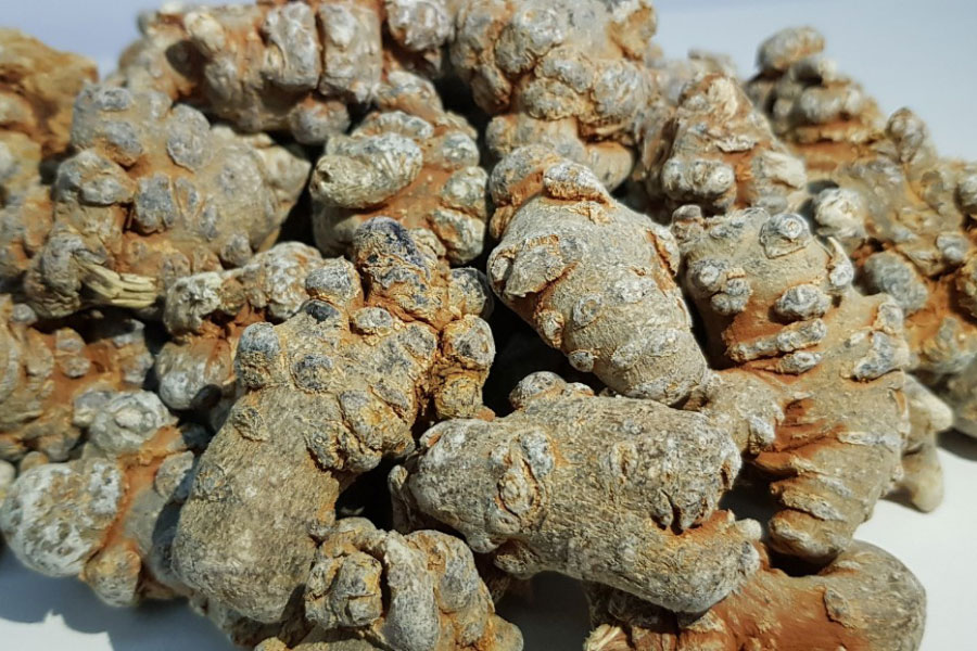 Củ tam thất bắc nguồn sản phẩm từ Bắc Hà - Lào cai