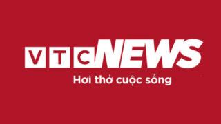 Báo VTCNews – Cà gai leo giải rượu mạnh đến nỗi chỉ nhấm rễ cũng tránh được say