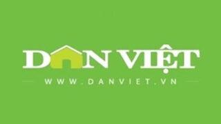 Báo Dân Việt – Nông dân Chương Mỹ bật mí cách thức trồng cà gai leo thành công