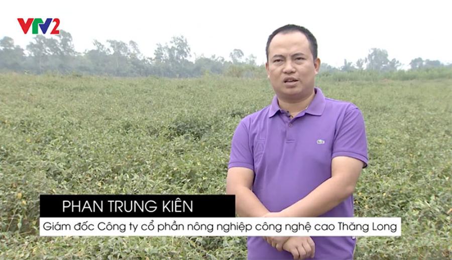CEO Phan Trung Kiên trong vùng trồng nguyên liệu Cà Gai Leo tại Chương Mỹ