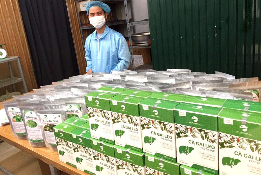 Trà túi lọc Cà gai leo Tân Thành Green, hỗ trợ bảo vệ tế bào gan, giải độc gan